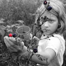 Young girl blackberry hunting